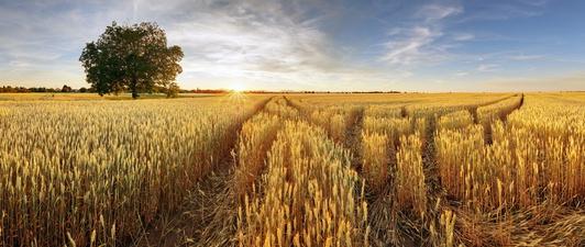 Nieruchomość rolna w postępowaniu upadłościowym